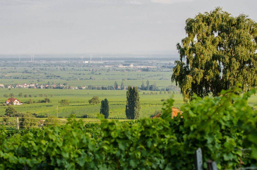 Blick-in-die-Rheinebene