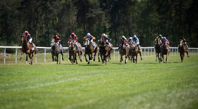 Pferderennen in Hassloch am 5.Mai 2016, Zielgerade